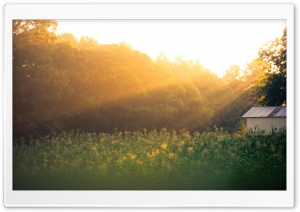 Field Of Corn At Sunrise