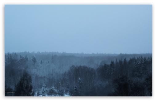 Download Winter in the woods ART.IRBIS Production UltraHD Wallpaper