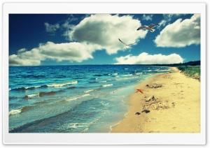 Perfect Ocean Beach - Birds