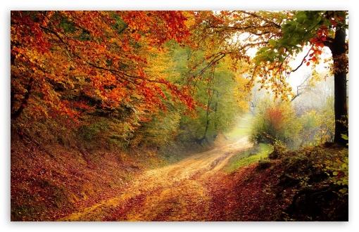 Download Fall Foliage UltraHD Wallpaper