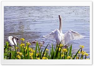 Swan Family, Spring