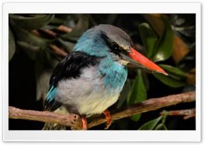Kingfisher Close Look