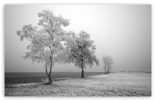 Download Frozen Trees UltraHD Wallpaper