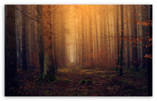 Download Enchanted Forest Background UltraHD Wallpaper