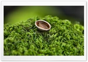 Nut Shell Close Up