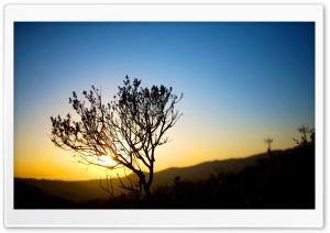 Tree Silhouette, Sunrise