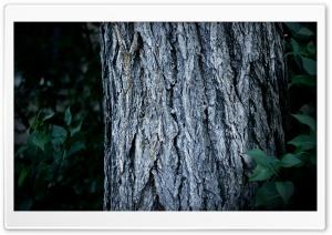 Tree Trunk Close-Up