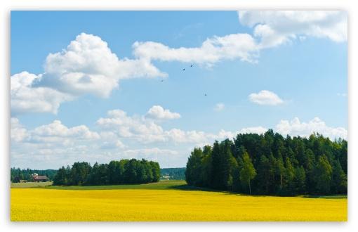 Download Yellow Fields UltraHD Wallpaper