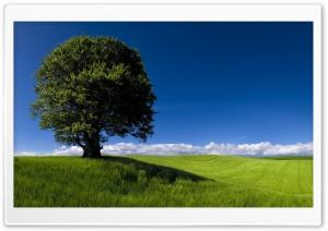 Summer Landscape Nature