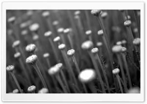Flower Stems