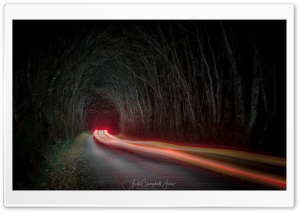 Tunnel of Trees, Night, Car...