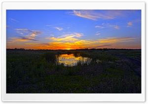 Purple Wildflower Sunset