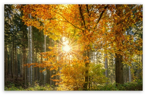 Download Forest Light Rays UltraHD Wallpaper