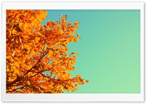 Retro Autumn