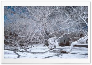 Infrared Winter