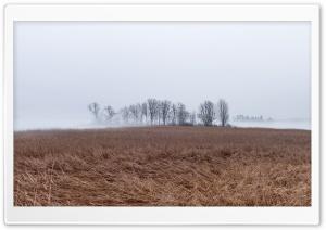 Landscape, Fog, Cold, Reeds,...