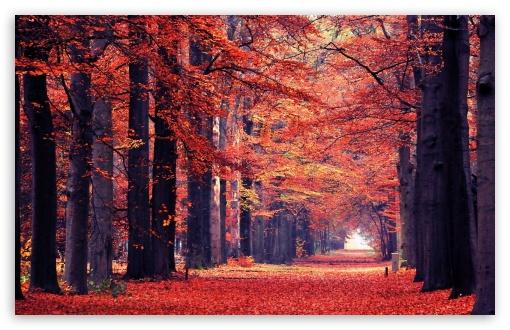Download Fall UltraHD Wallpaper