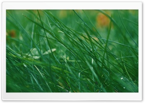 Through Green Grass