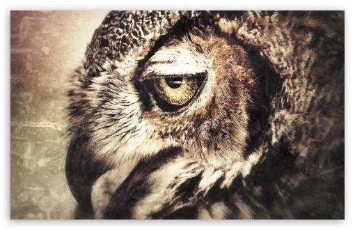 Download Owl Art UltraHD Wallpaper