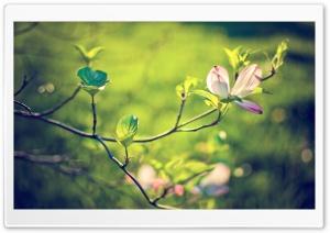 Dogwood Tree Blossom