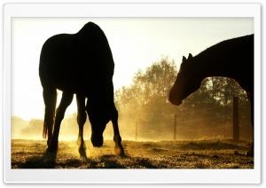 Backlit Horses Duesseldorf...