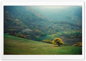 Armeni, Teghut, Mery, Tree,...