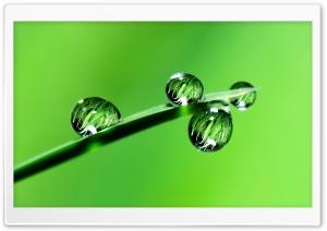 Raindrops, Grass, Macro