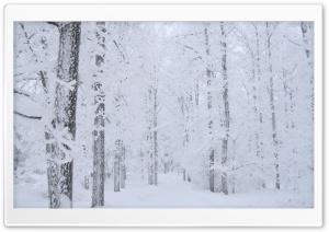 Winter Fairyrtale Landscape