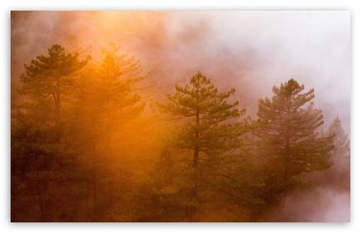 Download Fog Shrouded Forest UltraHD Wallpaper