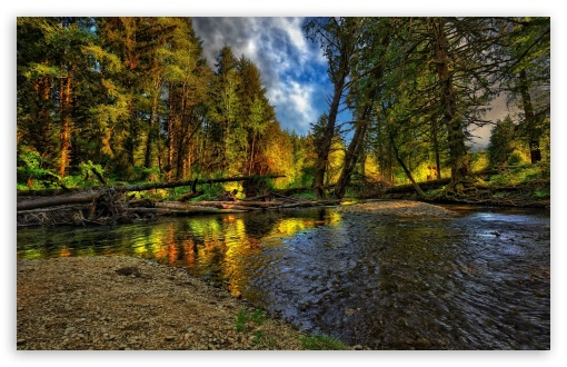 Download Springtime Forest UltraHD Wallpaper