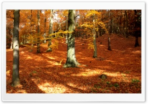 Autumn, Forest