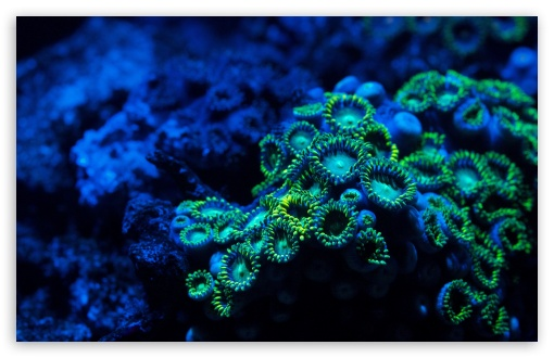 Download Zoanthids Coral UltraHD Wallpaper