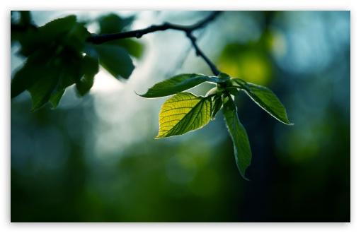Download Fresh Green Leaves Summer UltraHD Wallpaper