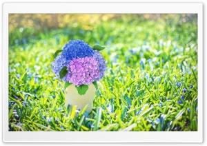 Spring Hydrangea Bouquet in a...