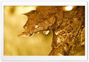 Dripping Golden Leaf