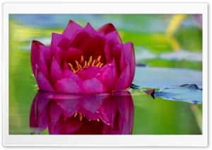 Beautiful Lotus Flower...