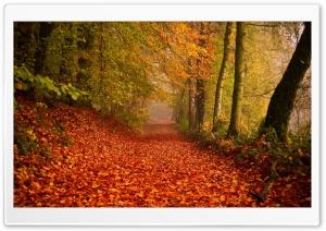 Beautiful Leafy Alley, Autumn