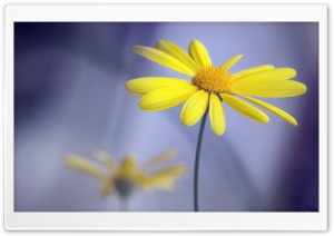 Yellow Flower With Stem
