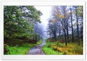 Scotland Galloway Forest Park