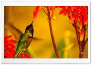 Hummingbird Green Back