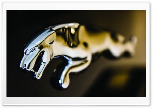 Jaguar Logo Close-up
