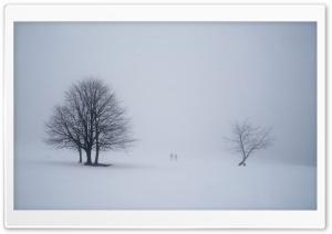 Misty Scene from Winterberg,...