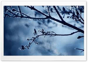 Frost Branch