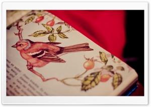 Bird Tale