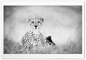Cheetah Monochrome