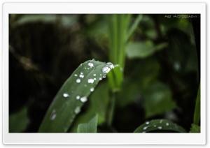 Water Drops On Leaf HD