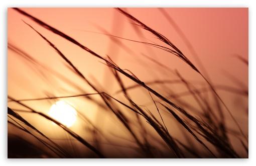 Download Grass, Sunset UltraHD Wallpaper