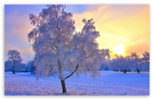 Download Colored Winter Sunset UltraHD Wallpaper