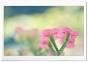 Botanical Garden Pink Flowers