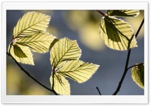 Tree Leaves In Sunlight